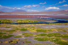 Laguna colorada in sud Lipez Altiplano reserva, Bolivia Stock Photo