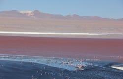 Laguna Colorada sul boliviano Altiplano immagini stock libere da diritti