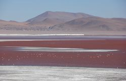 Laguna Colorada sul boliviano Altiplano immagine stock libera da diritti