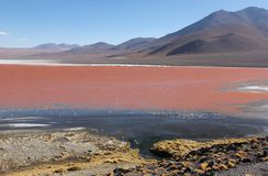 Laguna Colorada sul boliviano Altiplano fotografia stock libera da diritti