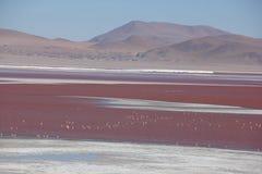 Laguna Colorada sul boliviano Altiplano fotografia stock
