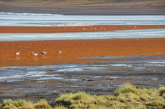 Laguna Colorada, Sur Lipez, South Bolivia Royalty Free Stock Image