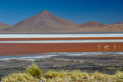 Laguna Colorada, Sur Lipez, South Bolivia Royalty Free Stock Photography