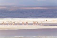 Laguna Colorada, Uyuni, Bolivia Fotografia Stock Libera da Diritti