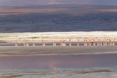 Laguna Colorada, Uyuni, Bolivia Arkivfoton