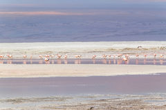 Laguna Colorada, Uyuni, Bolivia. Laguna Colorada, Salar de Uyuni, Bolivia Stock Photo