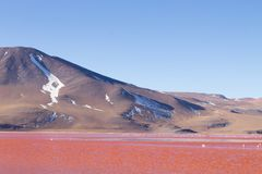 Laguna Colorada view, Bolivia. Laguna Colorada landscape,Bolivia. Beautiful bolivian panorama. Red water lagoon Royalty Free Stock Images