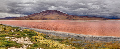 Laguna Colorada & x28; Bolivia& x29; Royaltyfri Bild
