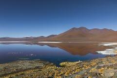 Laguna Colorado stock foto