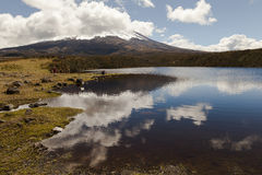 Laguna in the Cotopaxi National Park Stock Image