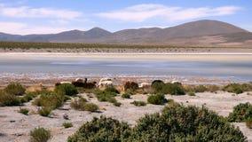 Laguna dans le Bolivien Altiplano, Amérique du Sud images stock