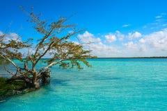 Laguna de Bacalar Lagoon in Mexico. Laguna de Bacalar Lagoon mangroove in Mayan Mexico at Quintana roo royalty free stock photo