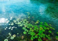 Laguna de Bacalar Lagoon nel Messico maya immagine stock libera da diritti