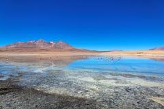 Laguna de Canapa, Bolivia. Laguna de Canapa, Altiplano, Bolivia, South America Stock Photo