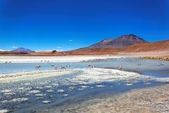 Laguna de Canapa, Bolivia Fotografia Stock