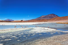 Laguna de Canapa, Bolivie Photo stock