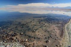 Laguna de Chaxa Reserva nacional de los flamencos del Los chile Fotografía de archivo libre de regalías