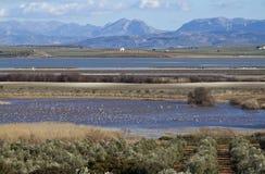 Laguna de Fuente de Piedra Royalty Free Stock Image