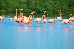 Laguna de Guanaroca, Cienfuegos, Cuba Imagen de archivo libre de regalías