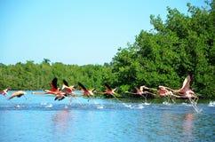 Laguna de Guanaroca, Cienfuegos, Cuba Royalty Free Stock Images