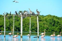 Laguna de Guanaroca, Cienfuegos, Cuba Stock Photography