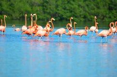 Laguna de Guanaroca, Cienfuegos, Cuba Royalty Free Stock Image