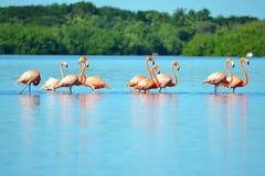 Laguna de Guanaroca, Cienfuegos, Cuba Stock Image