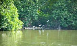 Laguna de Negombo en Sri Lanka imagen de archivo