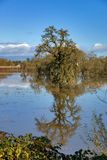 Laguna De Santa Rosa drzewo Obraz Royalty Free