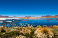 Laguna del azul de Altiplano Fotos de archivo libres de regalías