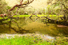 Laguna del bosque de Polylepis Imagen de archivo