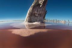 Laguna del sale, La Pampa, fotografia stock libera da diritti
