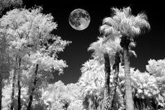 Laguna della palma della luna piena nell'infrarosso fotografie stock libere da diritti