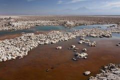 Laguna di Chaxa - deserto di Atacama - il Cile Fotografia Stock