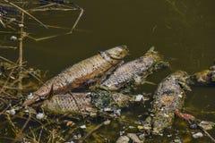 Laguna di Malibu nella diminuzione del pesce di California a centinaia Fotografia Stock