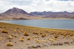Laguna di Miscanti, Cile Immagine Stock