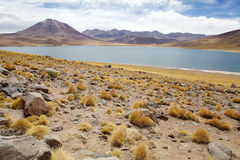 Laguna di Miscanti, Cile Immagini Stock Libere da Diritti