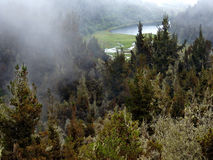 Laguna en el bosque Imagen de archivo libre de regalías