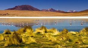Laguna en los planos de la sal del desierto de Atacama, Bolivia Foto de archivo