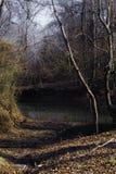 Laguna espeluznante del invierno fotografía de archivo libre de regalías