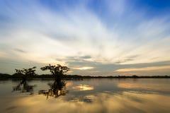 Laguna Grande Cuyabeno Ecuador Royalty Free Stock Photography