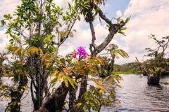 Laguna grandioso, árvores dos manguezais Fotos de Stock Royalty Free