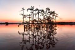 Laguna grandioso - reserva dos animais selvagens de Cuyabeno Árvores dos manguezais e pa imagens de stock