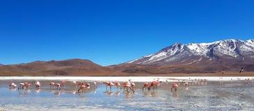 Laguna Hedionda, Боливия, Южная Америка стоковые изображения rf