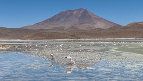 Laguna Hedionda - Bolivia Stock Photo