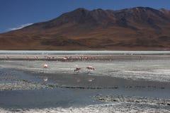 Laguna Hedionda con i fenicotteri Fotografie Stock Libere da Diritti