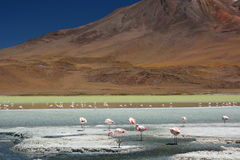 Laguna Hedionda Departamento de Potosà bolivia Imagen de archivo libre de regalías
