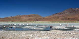 Laguna Hedionda Dipartimento di Potosà bolivia Immagini Stock Libere da Diritti