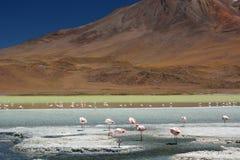 Laguna Hedionda Dipartimento di Potosà bolivia Immagine Stock Libera da Diritti