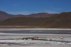 Laguna Hedionda et flamants Images libres de droits